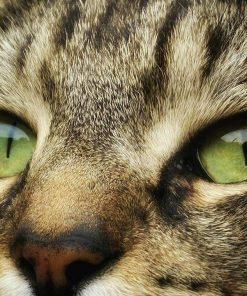 Schilderen op nummer - Close up van kat 🐈