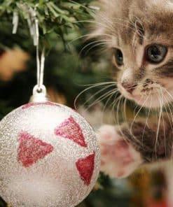 Schilderen op nummer - Kat met kerstbal 🐈