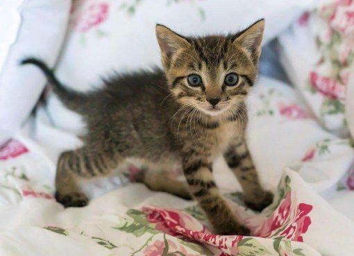 Schilderen op nummer - Kleine kat 🐈