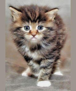 Schilderen op nummer - Verlegen kat 🐈