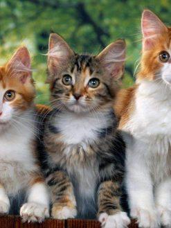 Schilderen op nummer 3 katten