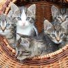 Schilderen op nummer 5 kittens in rieten mand