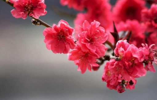 Schilderen op nummer - Abstracte roze bloemen 💐