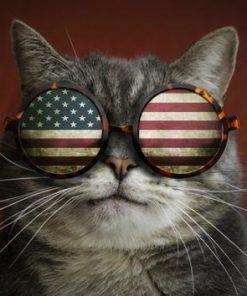 Schilderen op nummer - Amerikaanse kat 🐈