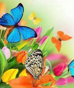 Schilderen op nummer - Bloemen en vlinders 💐