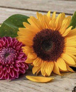 Schilderen op nummer - Bloemen op tafel 💐