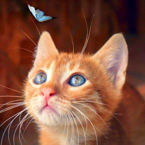 Schilderen op nummer - Bruine Poes met Blauwe Vlinder