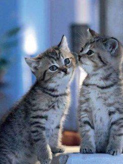 Schilderen op nummer - Familie Katten