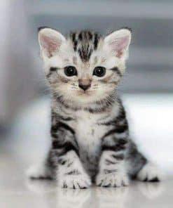 Schilderen op nummer - Grijze kitten