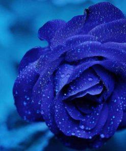 Schilderen op nummer - Mooie blauwe roos 💐