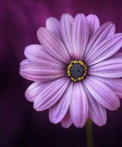 Schilderen op nummer - Mooie paarse bloem 💐