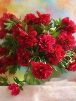 Schilderen op nummer - Prachtige rode bloemen 💐