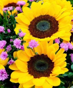 Schilderen op nummer - Prachtige zonnebloemen 💐