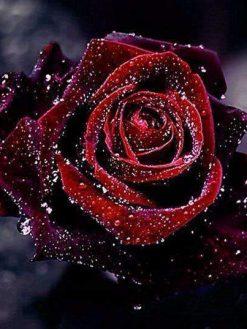 Schilderen op nummer - Rode roos 💐
