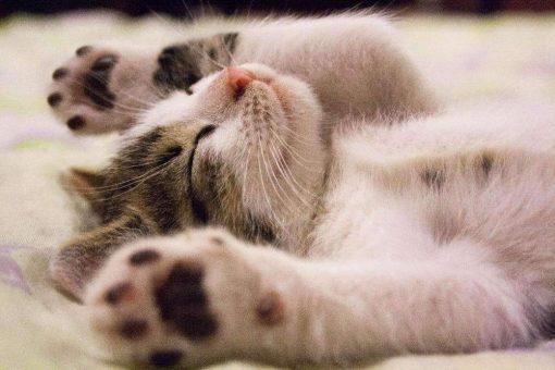 Schilderen op nummer - Slapende kat