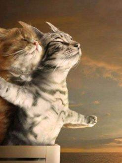 Schilderen op nummer - Twee katten Titanic