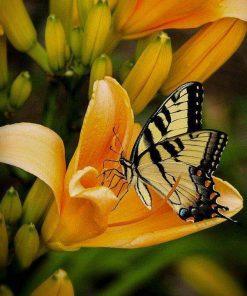 Schilderen op nummer - Vlinder op tulp 💐