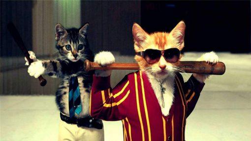 Schilderen op nummer - Stoere katten 🐈