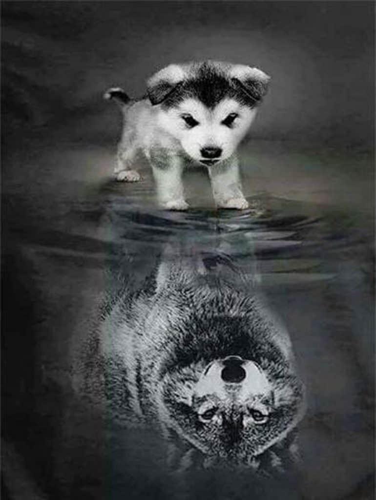Diamond Painting - Welpje tot grote wolf 🐺
