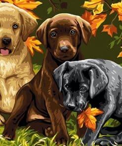 Prachtige Honden